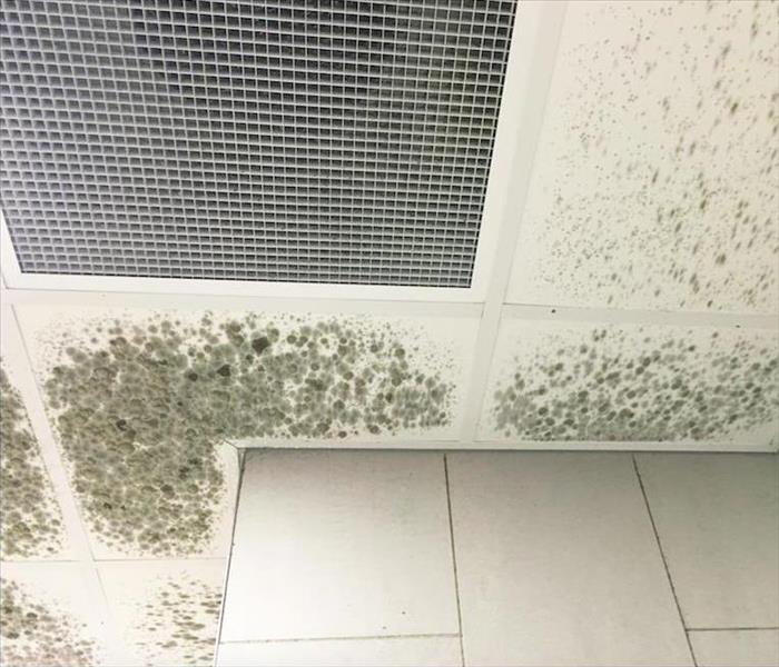 Why SERVPRO Introducing the Simple Way to Mold Damage Remediation Success in Boynton Beach