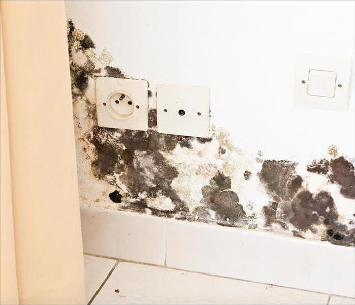 Mold Remediation Avoiding Mold Growth in Your Boynton Beach Home