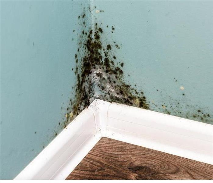 Commercial Why You Need Professional Mold Remediation for Your Boynton Beach Business