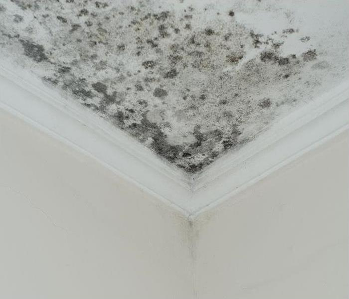 mold growing on ceiling