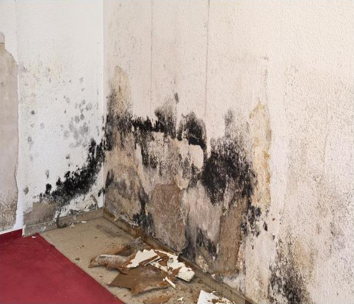 Mold Remediation Let Our Crew Assist You When A Mold Infestation Has Taken Over Your Home In Boynton Beach