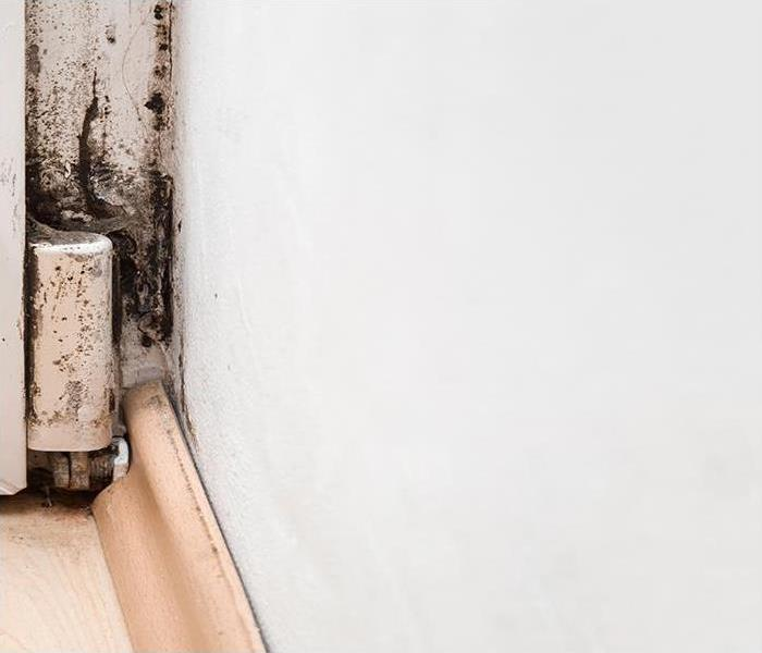 Mold Remediation Professional Mold Remediation For Your Boynton Beach Home